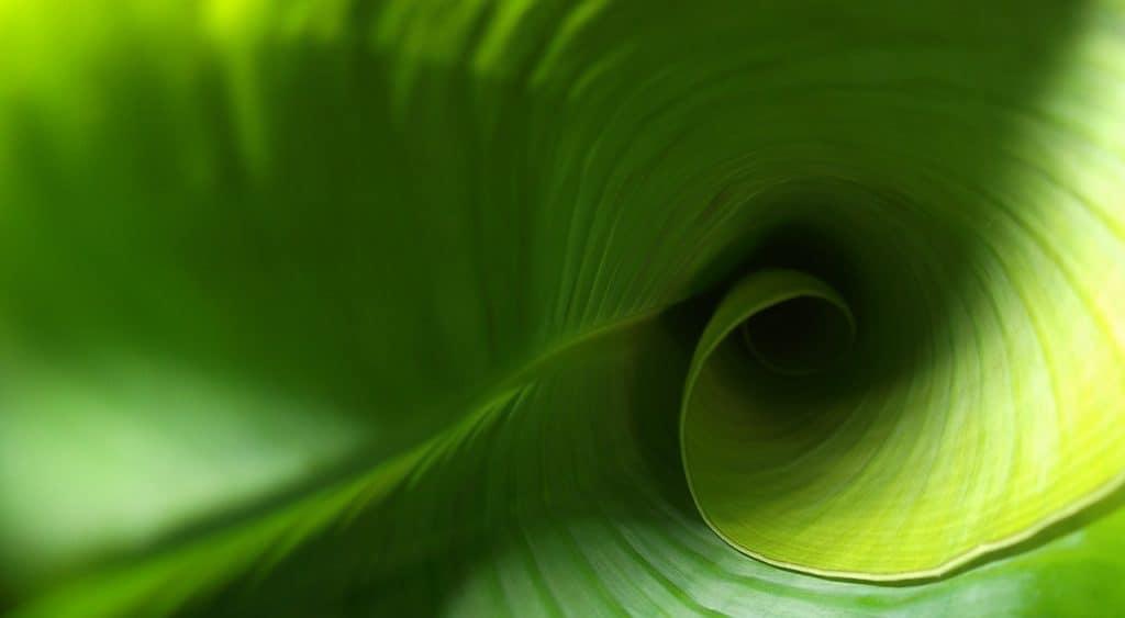 leaf, green, plant